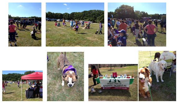 Bark for Life Walk for American Cancer Society