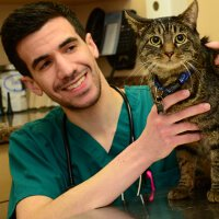 Feline Wellness Care Huntington NY