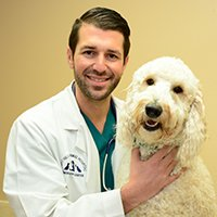 Canine Wellness Care Huntington NY