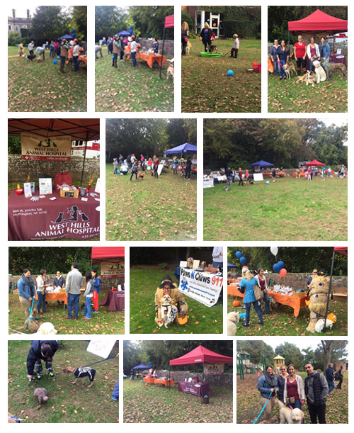 Halloween Dog Days hosted by Locust Valley Veterinary Clinic