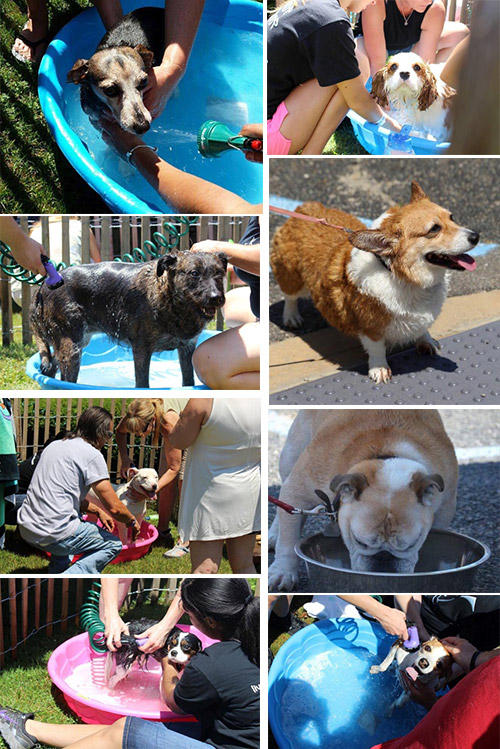 Live Love Bark Dog Wash Event at Islip Animal Shelter