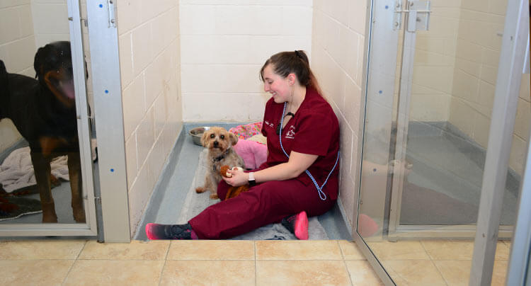 24hr Emergency Veterinarians in Long Island NY